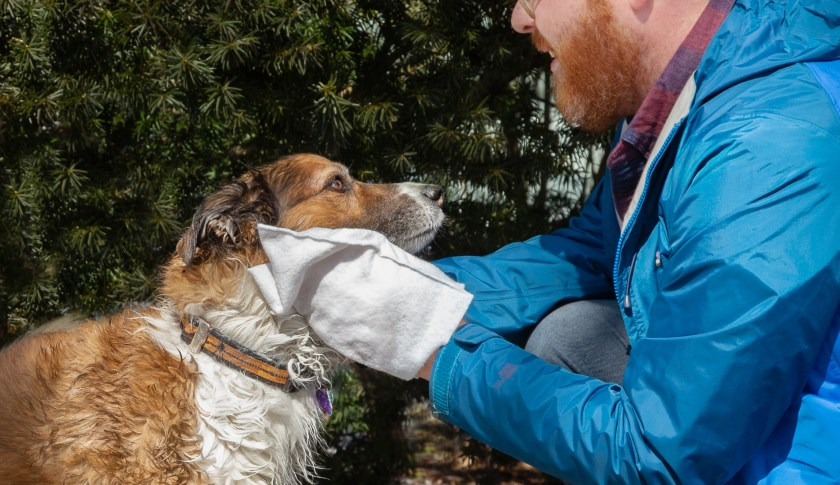 A man is seen giving his dog a quick wipe down with Scrubby's rinse-free bath mittens
