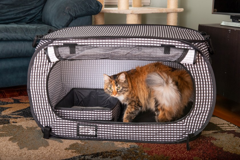 A Calico cat is seen sitting in a black & white checkered collapsible travel cat crate from Necoichi