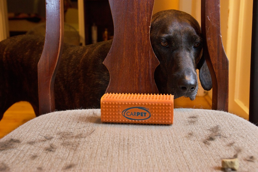A brindle dog is seen looking at a chair covered with fur being cleaned using CarPET's pet hair remover tool
