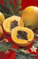 Papaya superfood