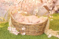 natural-rustic-baby-photography-sherman-oaks-cherry-blossom