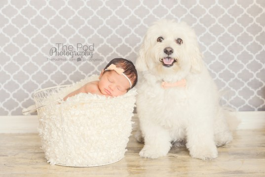 dog-and-newborn-baby-photography-los-angeles