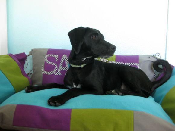 Pet Bed 4