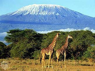 Kilimanjaro, due to rising from the ground rather than being one of a series of mountains, dominates the landscape.