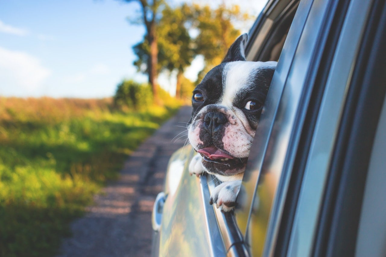 A dog with his head sticking out of a car's open window.