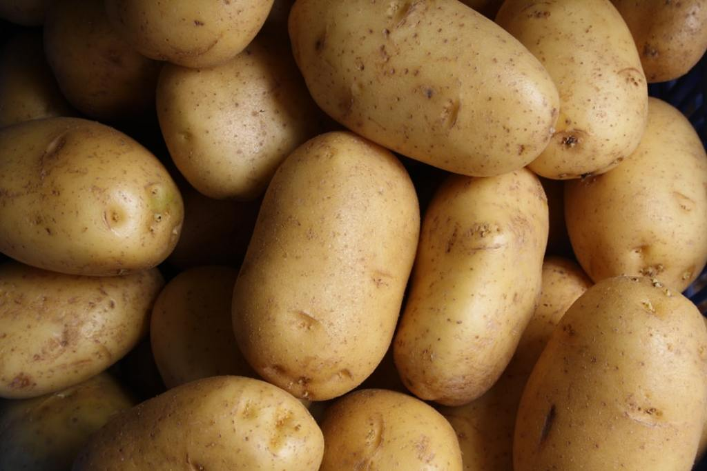 Potatoes for a Thanksgiving recipe.