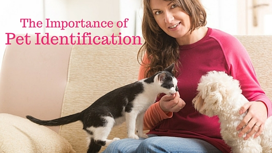 importance of pets Animals play an important role in many people's lives and often help with therapy , rehab, etc learn more about the possible benefits of pet companionship.