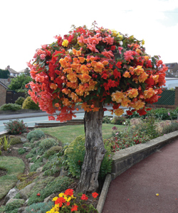 Alan Statham, winner 'Hanging Baskets & Containers' category