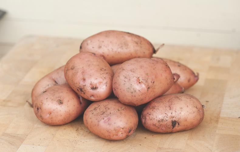 Potato 'Sarpo Mira' from T&M