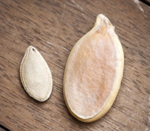Not just any pumpkin seed - this is world record-breaking pumpkin seed