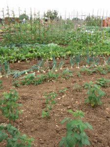 Your local allotment needs you!