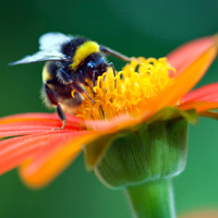 Gardening news - bees, fruit & veg and heavy metal