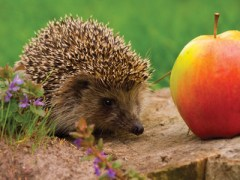 Gardening news - T&M team raises money for Greenfingers charity