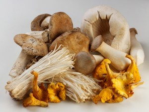 Gardening news - horticulture, twitter and deadly mushrooms