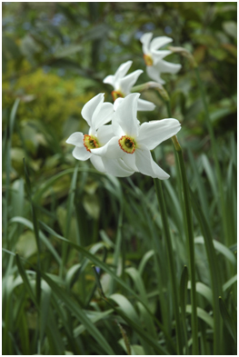 Whiffery in the borders - fragrant flowers - Carole Patilla