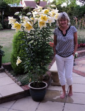 Staff tree lily competition results