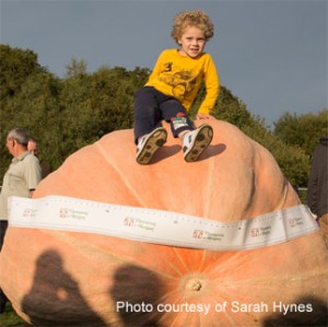 UK giant pumpkin record beaten