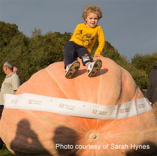 UK giant pumpkin record beaten