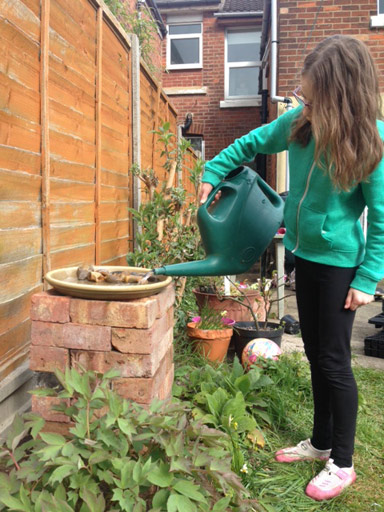 Weekend project - making a bird bath