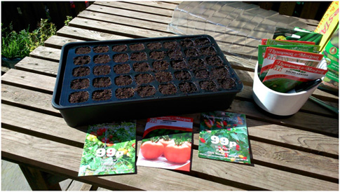 Sunshine and sowing seeds