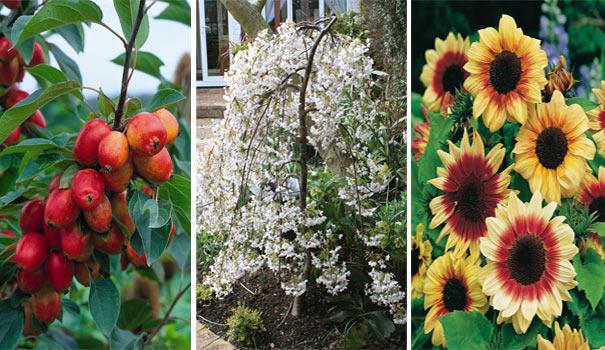 National Gardening Week 14th -20th April