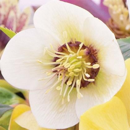 Plants for winter colour