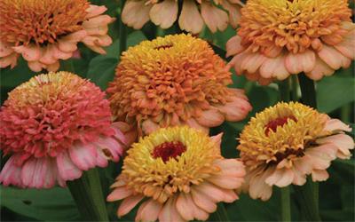 Top 5 seed varieties
