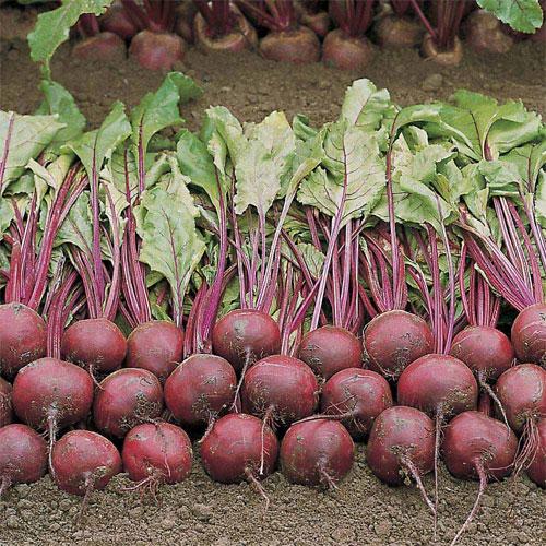RHS Award of Garden Merit Vegetables