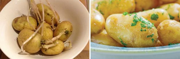 Potato 'Charlotte'