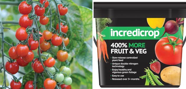 Tomato 'Sweet Aperitif' and incredicrop®