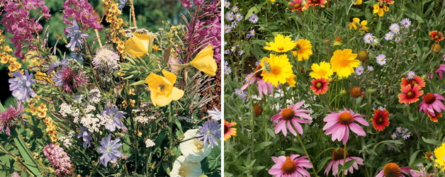 Meadowland Mixture and Wildflower 'Honey Bee Mixed'