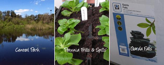 Central Park, Petunia Frills & Spills and Garda Falls