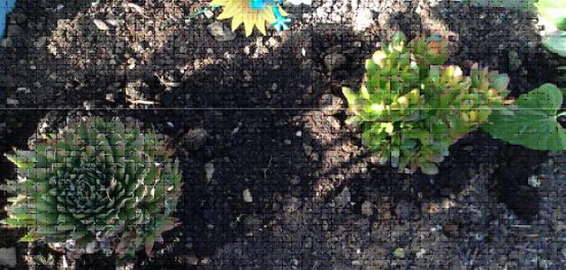 Peace Lilly, Money Plant and Aloe Vera