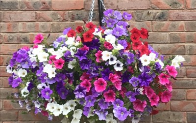 How to Plant up Hanging Baskets
