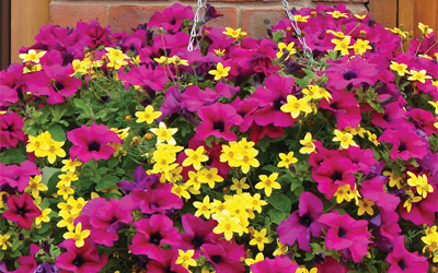 Hanging basket habits revealed