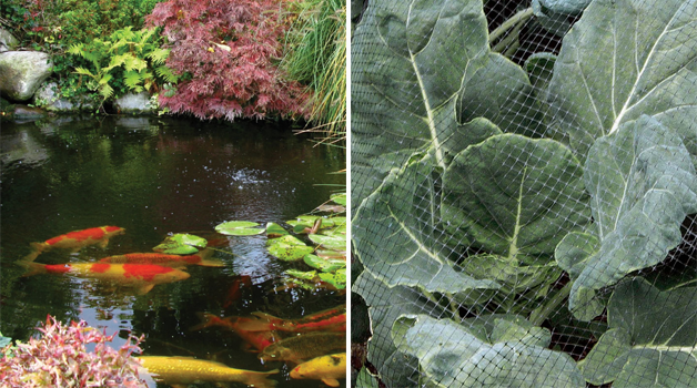 Pond wizard & netting for brassicas