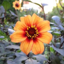 Beautiful in bloom