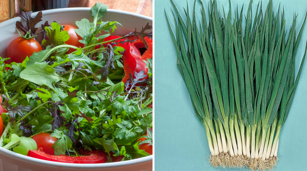 Salad Leaves 'Speedy Mix' & Spring Onion 'Feast' F1 Hybrid