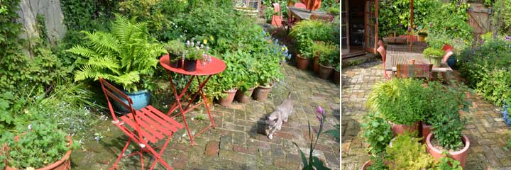 back garden now