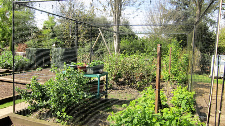 Fruit Cage