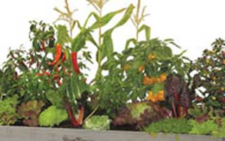 4 steps to successful vegetable gardening in containers