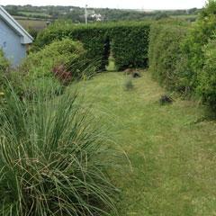 grassy knoll june 2017