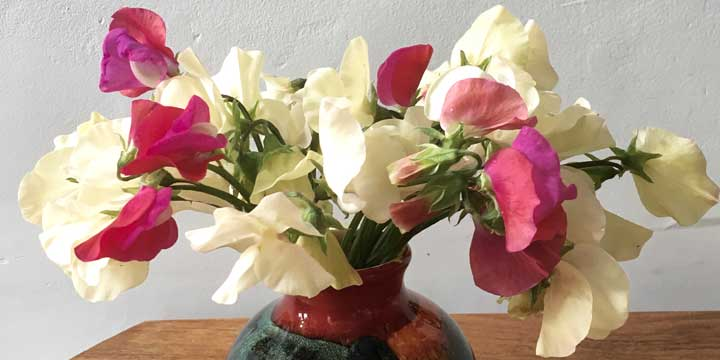 The scent of a sweet pea