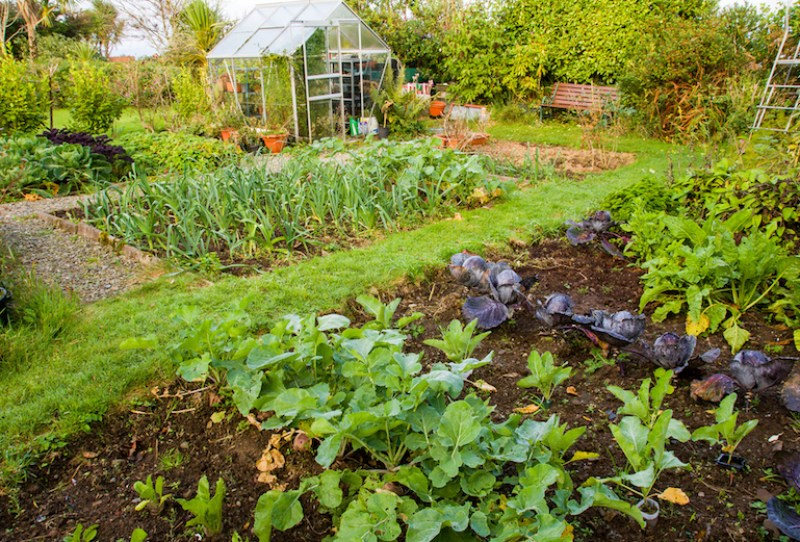 10 awesome allotment blogs | blog at thompson & morgan