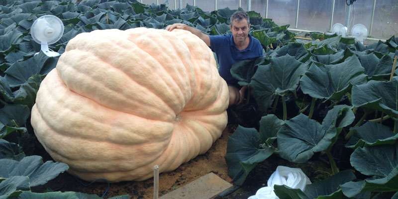growing a giant pumpkin