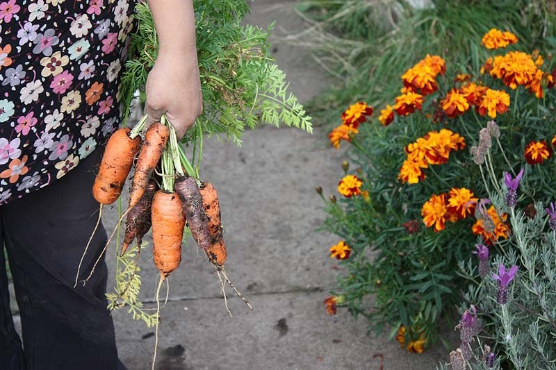 shaheen with her carrots