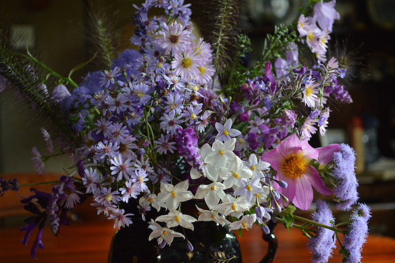 flowers from the blooming garden