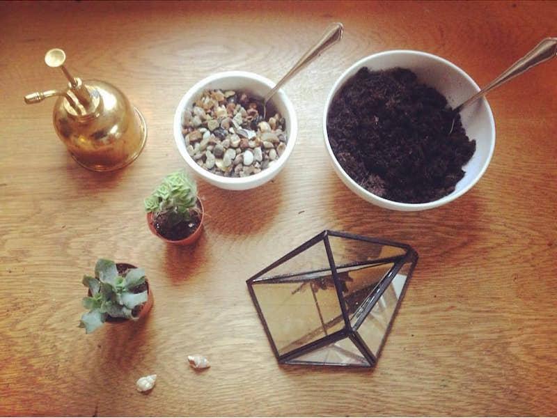 hanna grows open terrarium