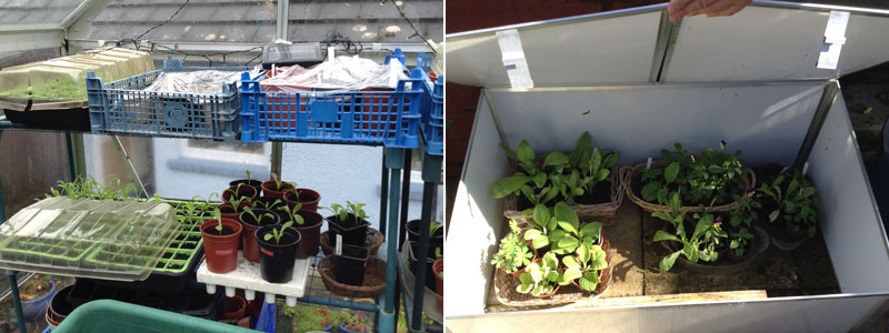 Amanda's blog for September 17 - seedlings and cold frame