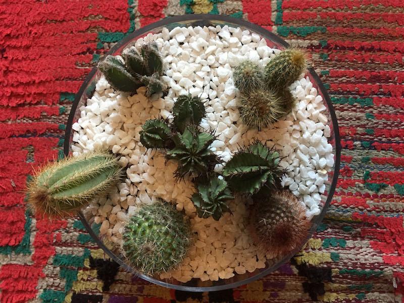 urban botanics mini cactus garden